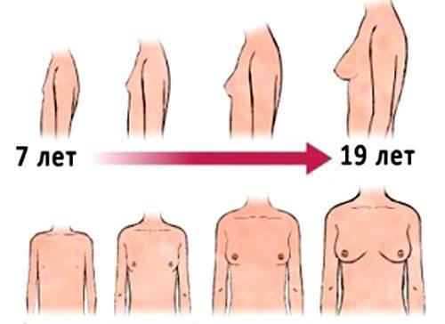 До скольки лет растет грудь