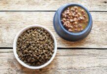 Сухой или влажный корм для кошек — что лучше давать