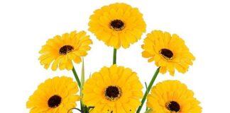 искусственные цветы, купить искусственные пионы